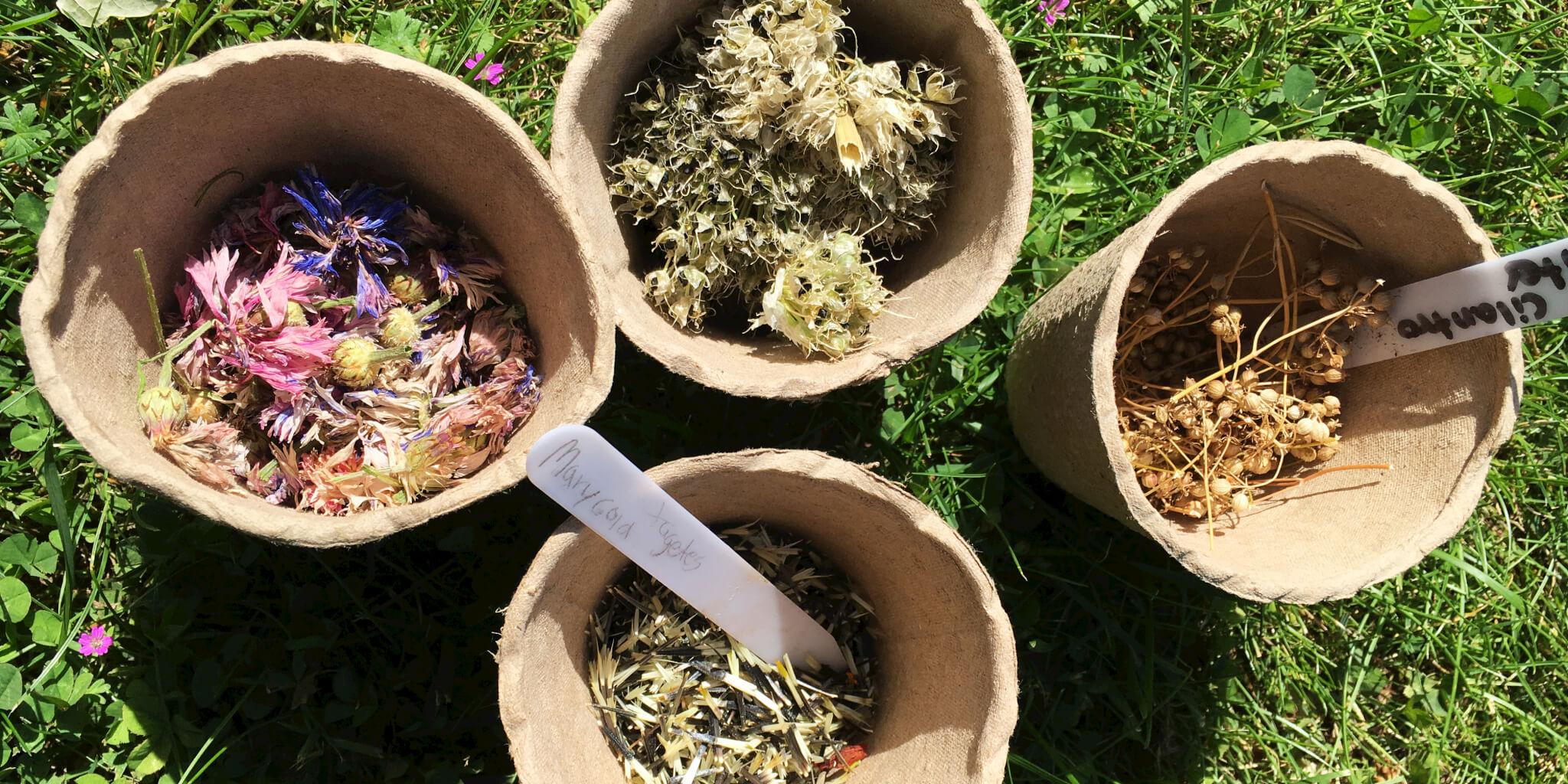 saml dine egne frø fra haven