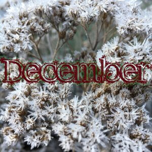 decembers hygge i haven