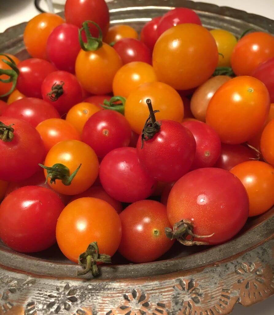 tomater på friland