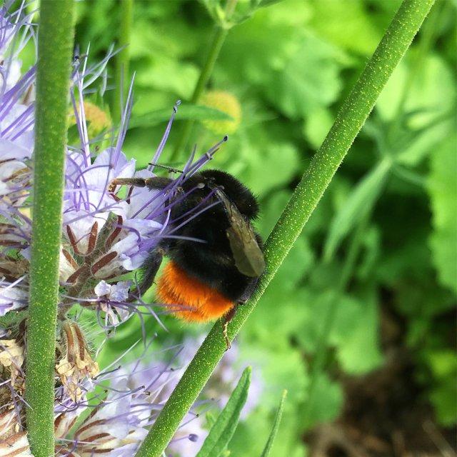 Bee Happy Endelig kom solen  efter flere dage medhellip