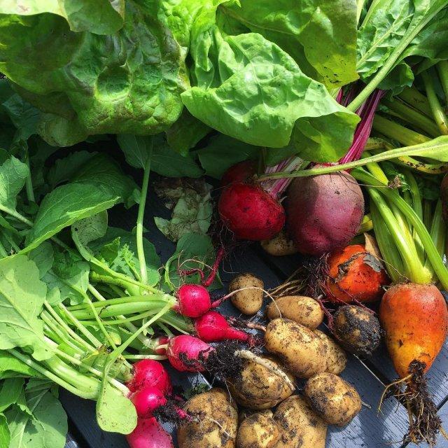 rets frste kartofler lkre rdbeder i flere farver sprd salathellip