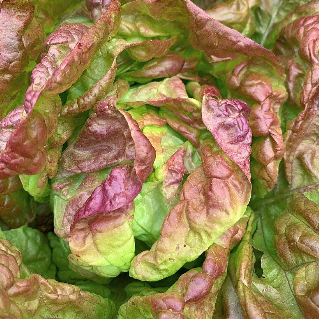 hjemmedyrket salat